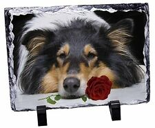 A Rough Collie Dog with Red Rose Photo Slate Christmas Gift Ornament, AD-RC2RSL