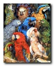 Collage Tropical Parrots Birds Animal Wall Decor Art Print Poster (16x20)