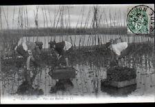 ARCACHON (33) OUVRIERS au travail aux PARC à HUITRES animé en 1907