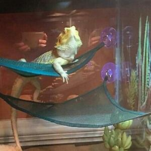 2 Pcs Bearded Dragon Hammock Lizard Lounger Ladder Hanging Bed Accessories New