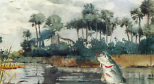 Black Bass, Florida  by Winslow Homer  Paper Print Repro