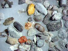Devonian ostracod tentaculites fossil sample Windom Shale NEW fine fraction