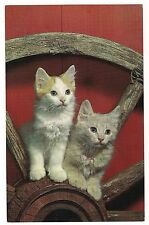 Old WOODEN Wood WAGON WHEEL with PAIR OF KITTENS Vintage Postcard Kitty Cat