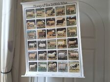 More details for sheep of the british isles, 2 x poster's (free postage)