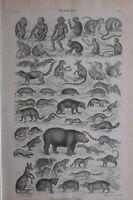 1877 Aufdruck Mammalia Mammels Bat Affe Igel Flusspferd