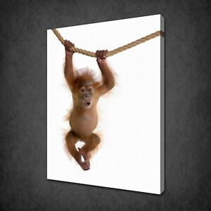 HANGING ORANGUTAN BABY CANVAS PRINT PICTURE WALL ART HOME DECOR FREE DELIVERY