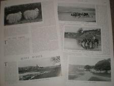 Photo article Quiet Sussex 1903 ref U