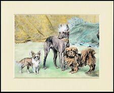 CHINESE CRESTED PAPILLON PEKINGESE LOVELY LITTLE DOG PRINT READY MOUNTED