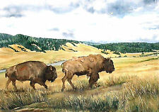 Hayden Valley Bison Yellowstone National Park Watercolor Reproduction