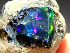 63.8 ct New Found Natural Black Opal Rough, Ethiopia! Opal267