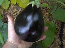 Black Beauty Eggplant *Heirloom* (100 Seed's)
