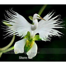 ~Radiat~ 100pcs Heron Orchid Japanese Radiata Indoor Flower Seeds Home Gardening