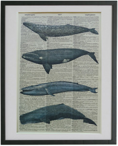 Whales Print No.602, nautical poster