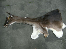 Fallow deer tanned cape stag shouldermount Hide Skin buck Antlers european