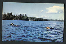 C1960s View of a Cow Moose & Offspring Swimming, Canada