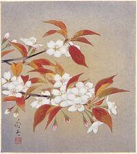 japanese shikishi  Title :Wild cherry tree(April)/isao kawahara