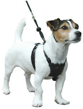 Company of Animals Sporn Non-pull Harness S Ls01 divers Facile a utiliser