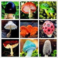 24 kinds Mushroom Bonsai Succulent Ornamental Vegetable Garden 100 PCS Seeds NEW