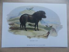 Shetland Poney Pony Hills Cows Nature 1988 Art Postcard Used Perfect Unposted