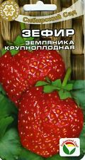 """Strawberries """"Zephyr"""" (Siberian garden)"""