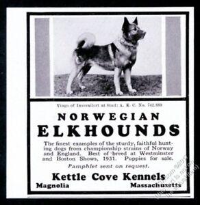 1931 Norwegian Elkhound stud dog photo Kettle Cove Kennels breeder print ad
