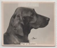 Irish Setter 1930s Champion  Dog Breed Canine Pet Ad Trade Card