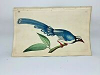 Chinese Cuckoo - 1783 RARE SHAW & NODDER Hand Colored Copper Engraving