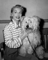 Canadianborn American Actress June Havoc With Her Dog 1954 She Is To OLD PHOTO