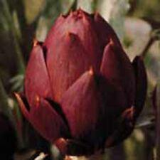 Kings Seeds - Artichoke Purple Globe - 40 Seeds