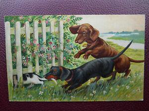 Dachshund Dackel Teckel Dogs Cat *Vintage* Artist Drawn 1908 Hildesheimer 5193