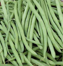 Bohnen Buschbohnen Filetbohne Delinel Samen