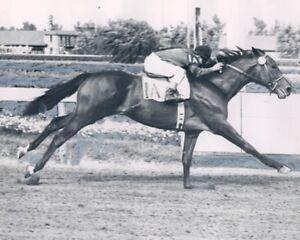CITATION 8X10 PHOTO HORSE RACING PICTURE JOCKEY B/W