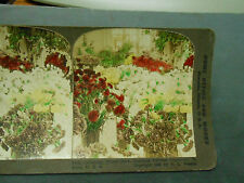 ANTIQUE STEREOVIEW PHOTO PRIZE CARNATIONS  FLOWER SHOW LOUIS PURCHASE EXPO