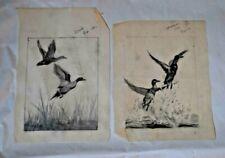 2 REINHOLD H. PALENSKE (1884-1954) Original Drawings Ducks Birds