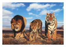 WILD LION TIGER LEOPARD ANIMAL AFRICA NATURE WALL ART CANVAS PICTURE PRINTS