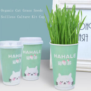Cat Grass Seeds Soilless Culture Cultivation Kit Pet Cat Remove Hair Ball Newly
