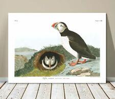 "FAMOUS SEA BIRD ART ~ CANVAS PRINT  8x10"" ~ JOHN AUDUBON ~ Puffin"