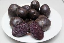 Purple Peruvian Potatoes Selling at a Great Price