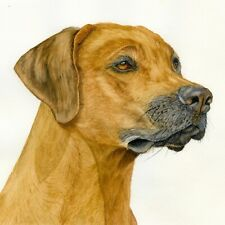 Rhodesian Ridgeback Dog Portrait, Watercolour PRINT from an Original Painting