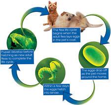 Natural CAT Flea KILLER & WORMER 200g Effective Safe Organic DIATOMACEOUS EARTH