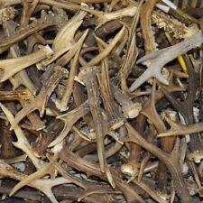 1kg MIX Cornes de Chevreuil, massacre chasse bois de cerf FR