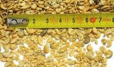 1 kilo ~ 5 L GAMMARUS ASSECCATO GAMBERETTI PICCOLI CIBO MANGIME PESCI TARTARUGHE