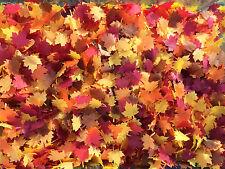Biodegradable Confetti Autumn Leaf Wedding Leaves Fall hint of brown Handmade