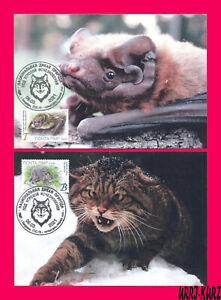TRANSNISTRIA 2021 Nature Fauna Animals Mammals Bat Wild Forest Cat MaxiCard Card