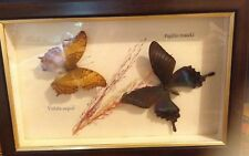 2 PCS of Real Butterfly Display Rare Insect  Preserved Dried Framed
