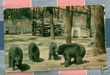 Old Postcard 1915 Denver Colo The Bears in City Park