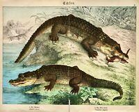 1887 SCHUBERT CHROMO #4 Alligator and Crocodile With Humans/Prey/Water/Greenery