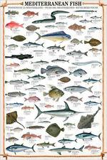 MEDITERRANEAN FISH 61 Saltwater Species Wall Chart POSTER