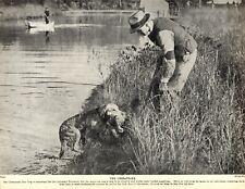 1930s Antique Chesapeake Bay Retriever Print Vintage Photograph Print 3592-B