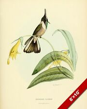 HUMMING BIRD PERCHED & YELLOW FLOWER PLANT PAINTING AVIAN ART REAL CANVAS PRINT